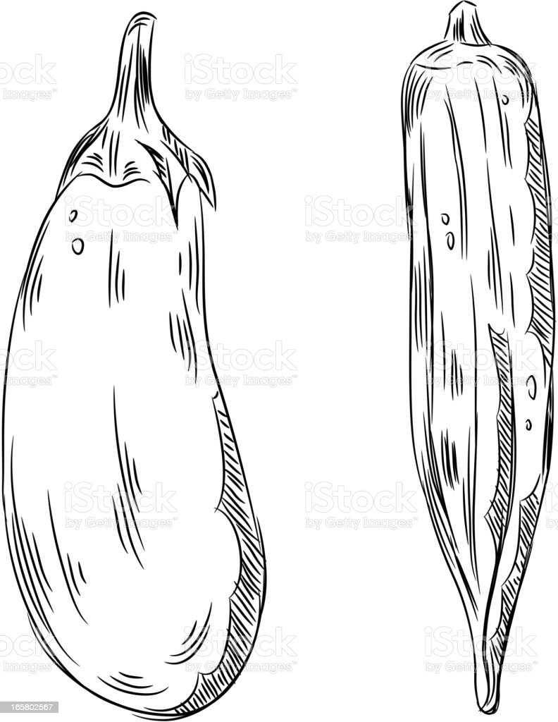 detailed drawings of eggplant and okra royalty free stock vector art