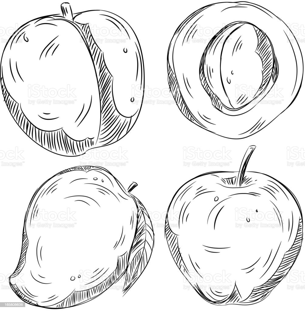 Detailed Drawings of Fruits vector art illustration