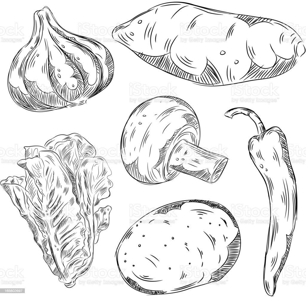 Detailed Drawings of Vegetables royalty-free stock vector art