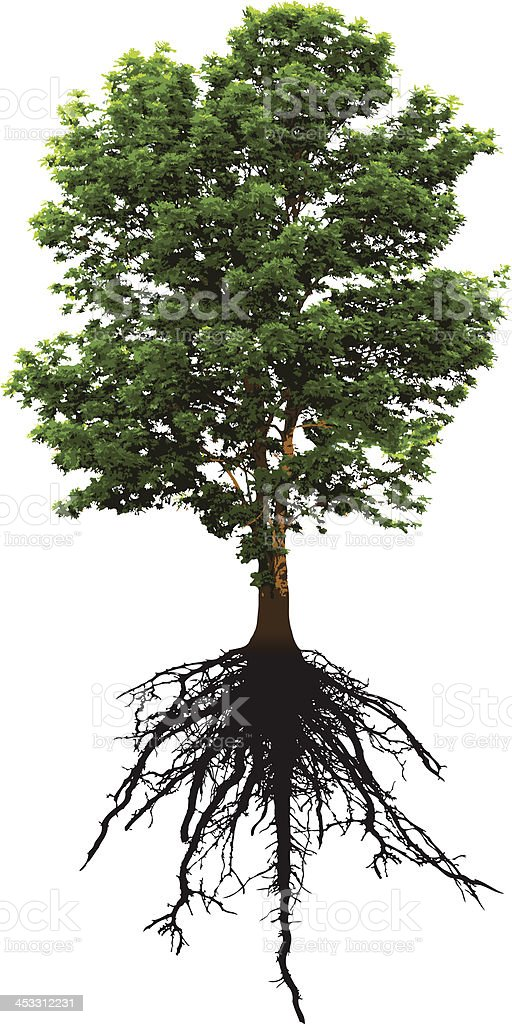 Detailed Green Tree and it's Intricate Roots Below vector art illustration