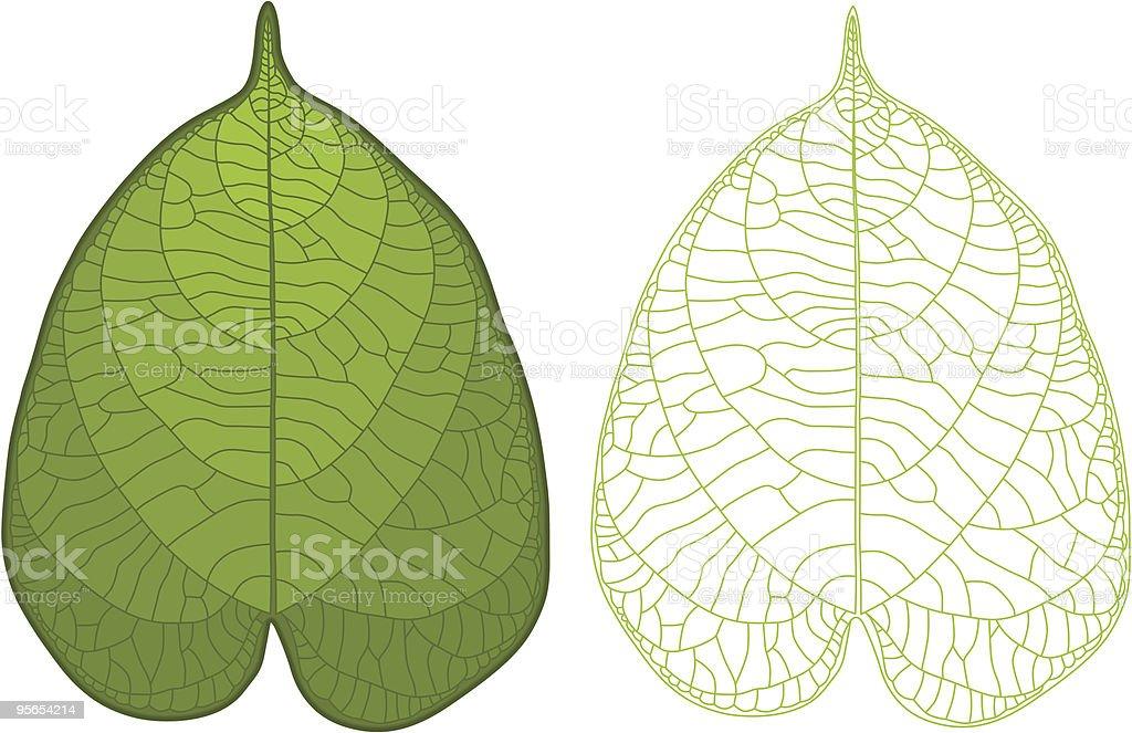 Detailed leaf vector art illustration