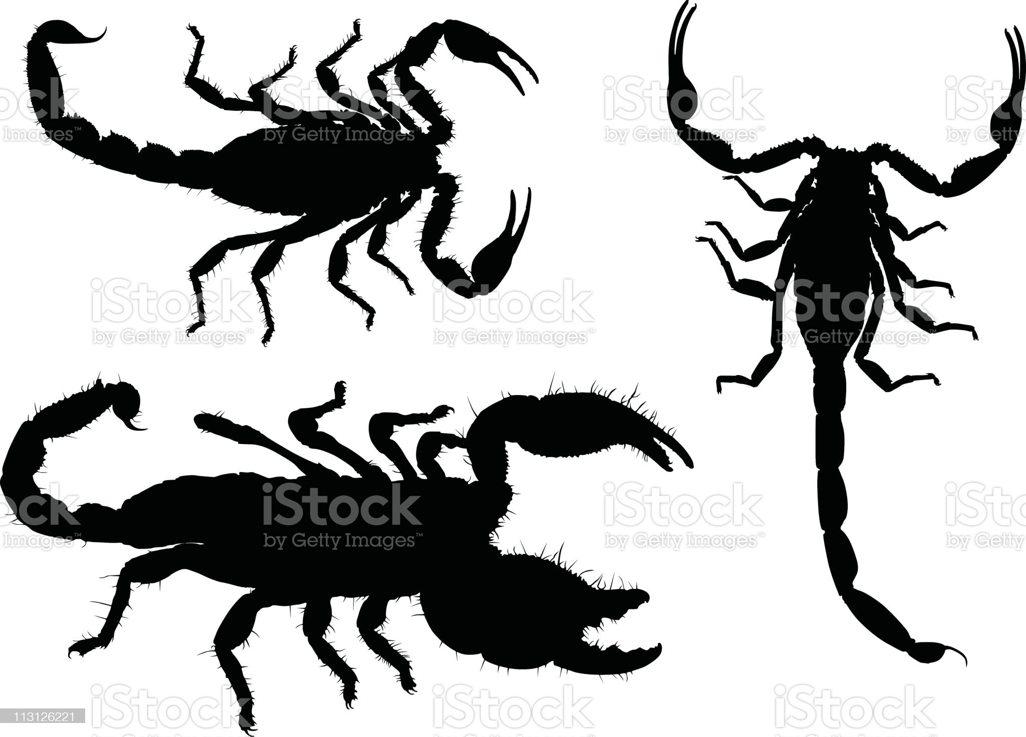 Detailed Scorpion Silhouettes royalty-free stock vector art