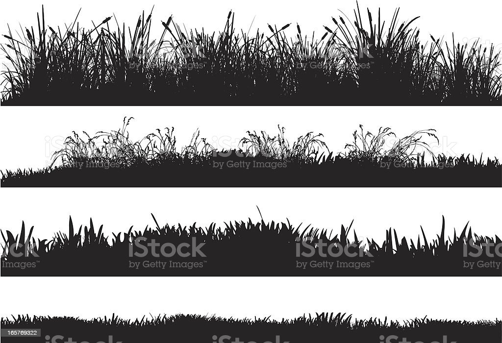 Detailed silhouettes of different grass floors vector art illustration