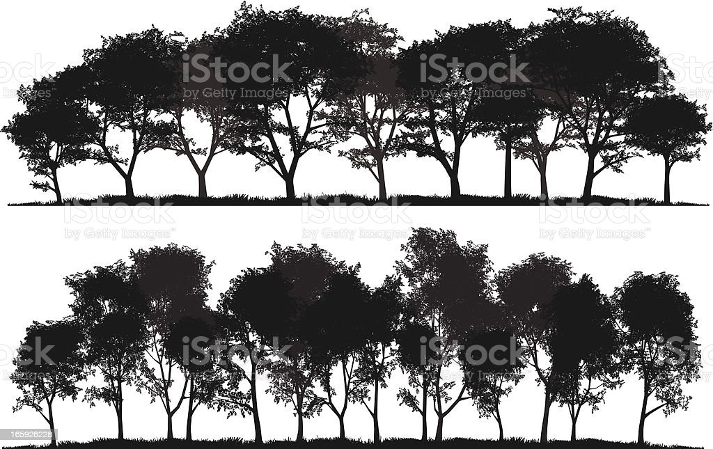 Detailed silhouettes of trees vector art illustration