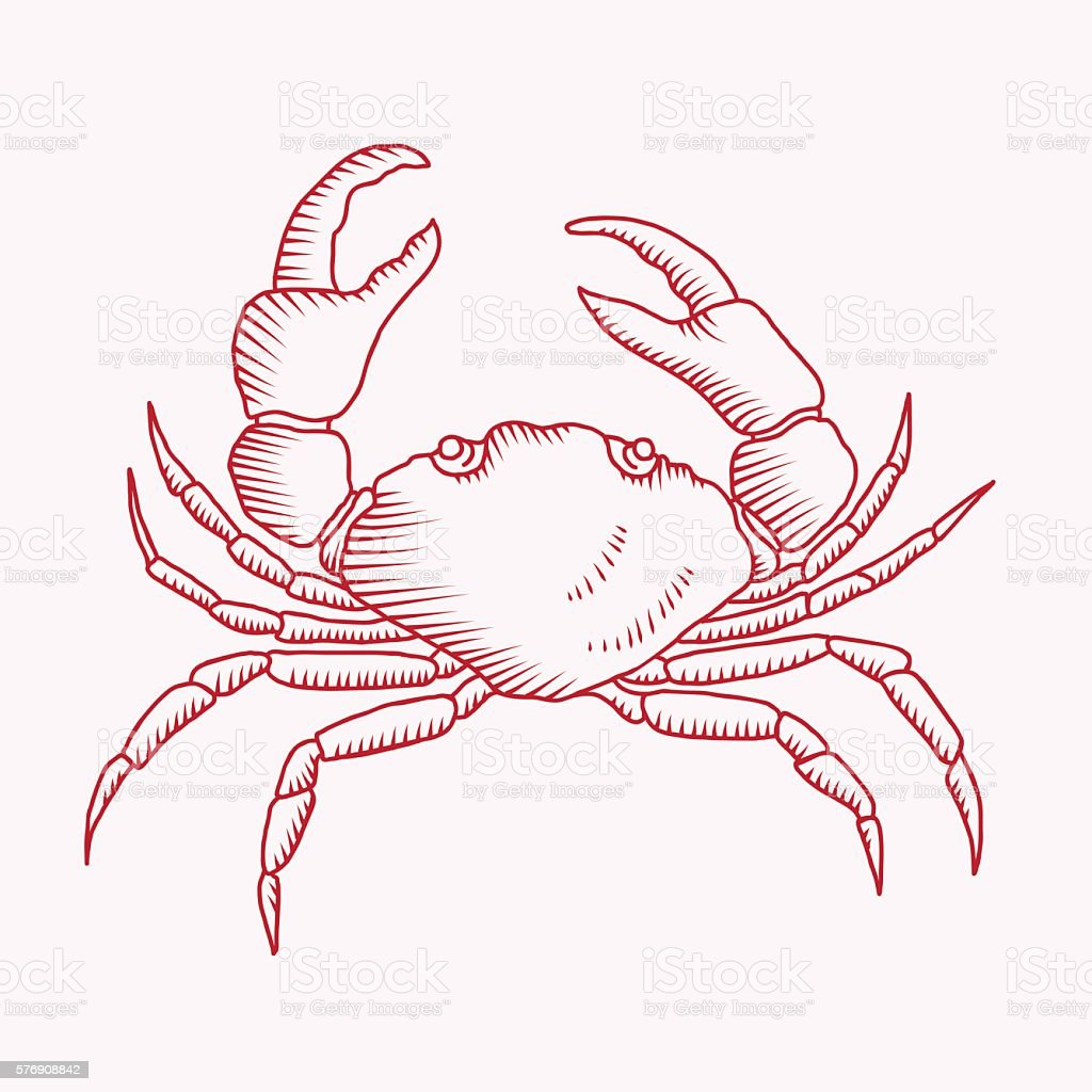 Detailed vector drawing of a sea crab vector art illustration