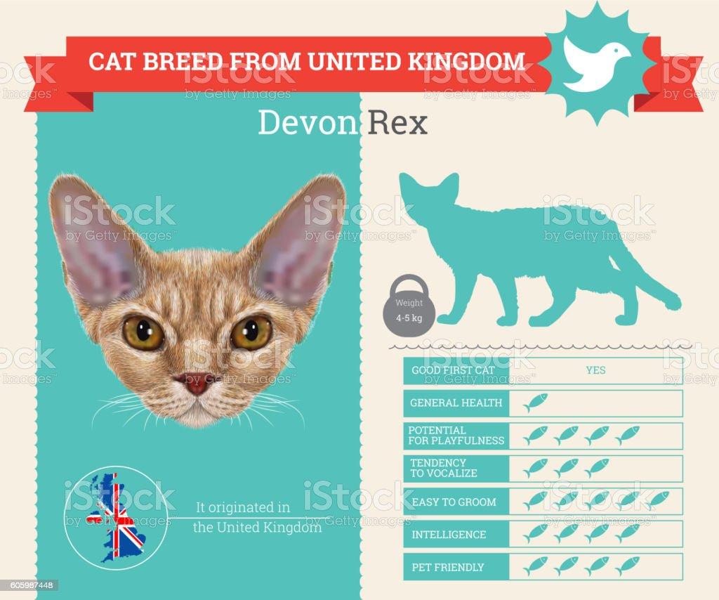 Devon Rex Cat breed vector infographics vector art illustration