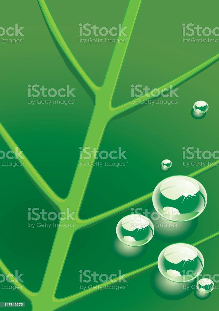 dew on leaf vector art illustration