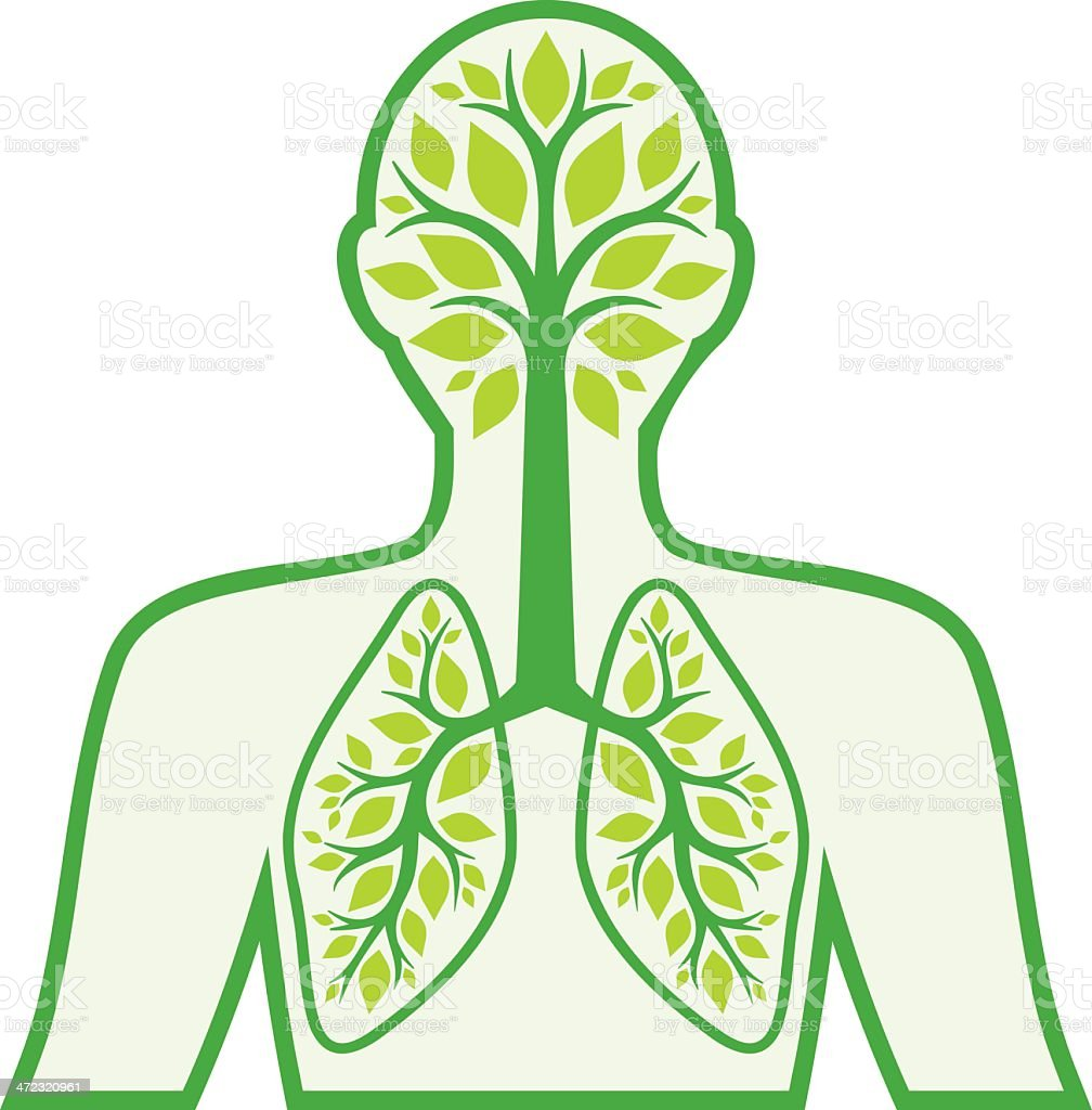A diagram in green of the human respiratory system vector art illustration