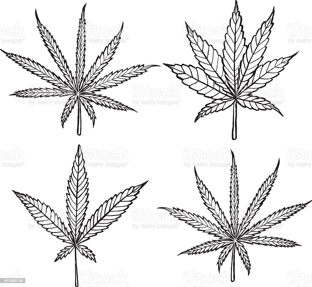 Diagram of different cannabis leaf varieties - black and white vector art illustration