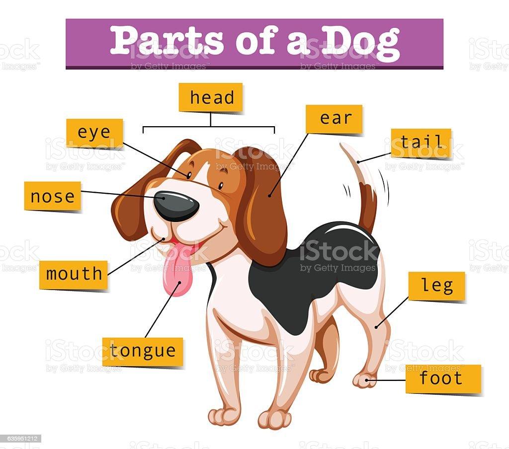 Diagram showing parts of dog vector art illustration