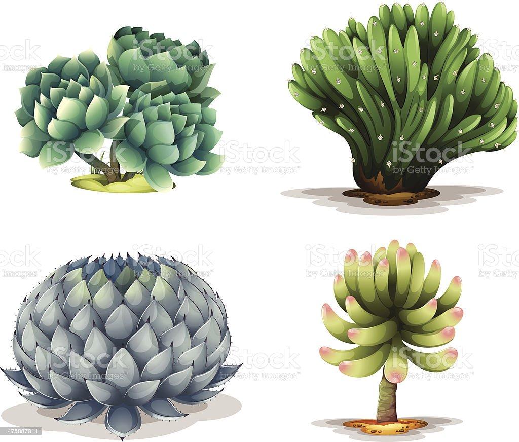 Different cacti vector art illustration