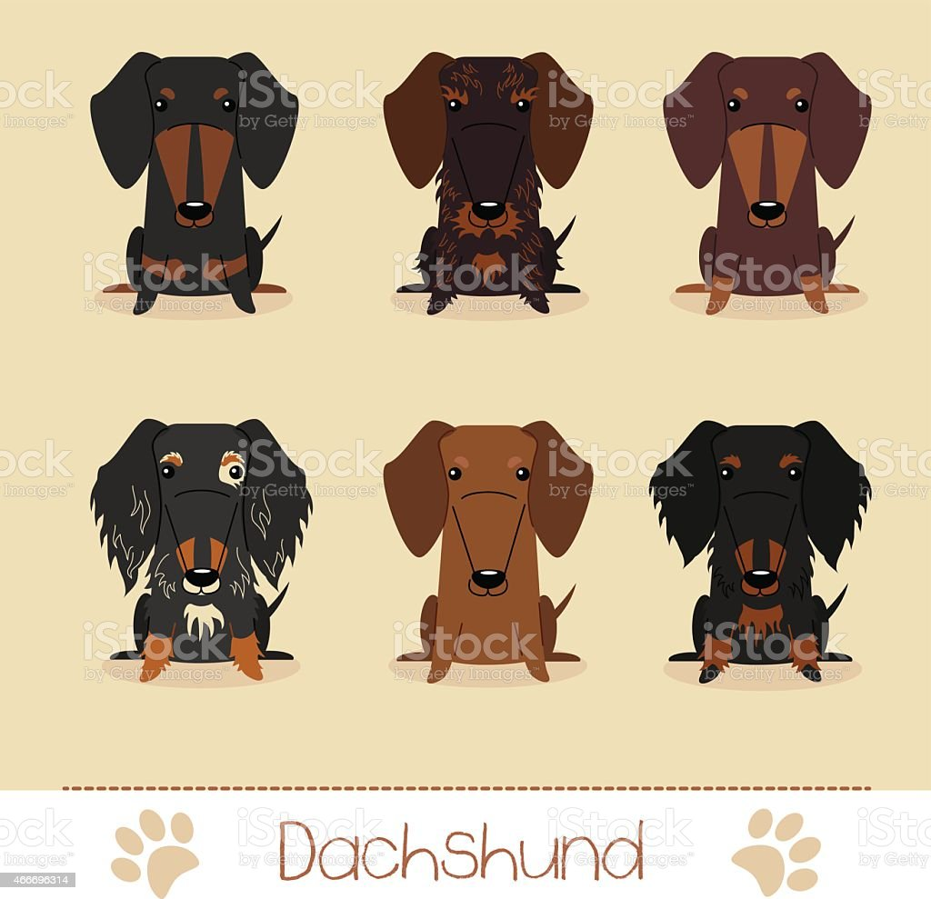 Different colors dachshund vector art illustration