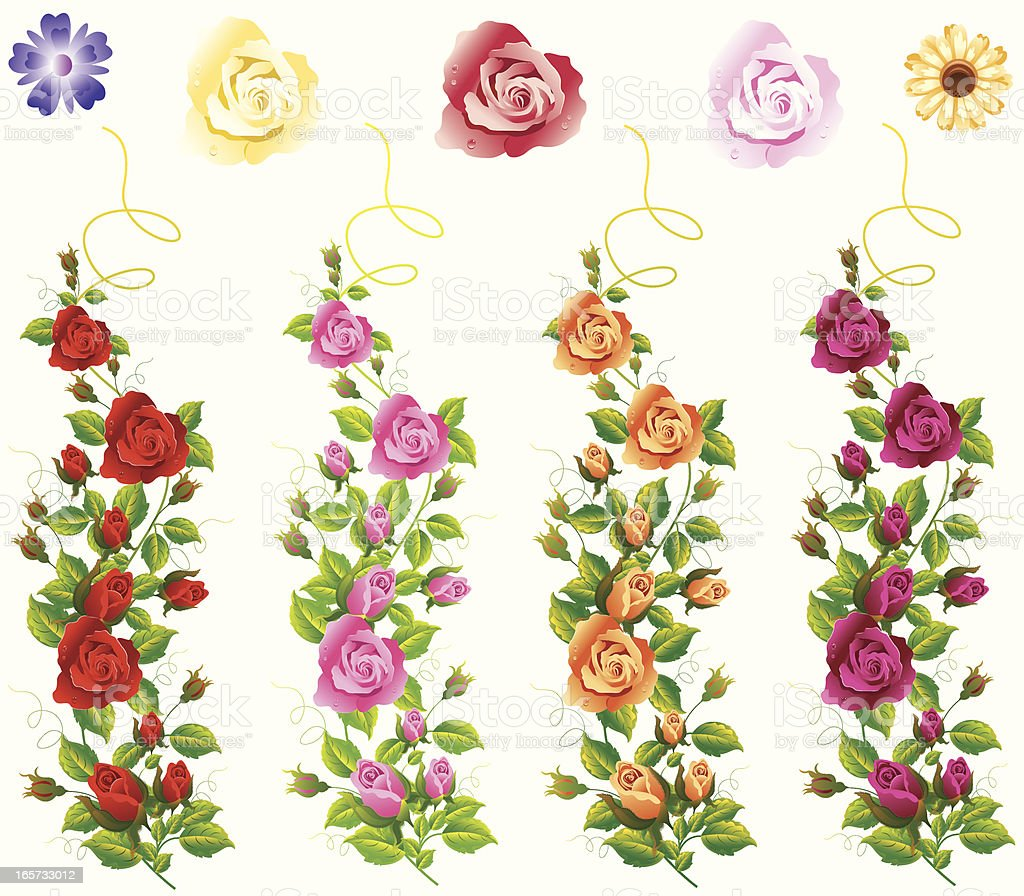 Different Colour Rose Vine Set. royalty-free stock vector art