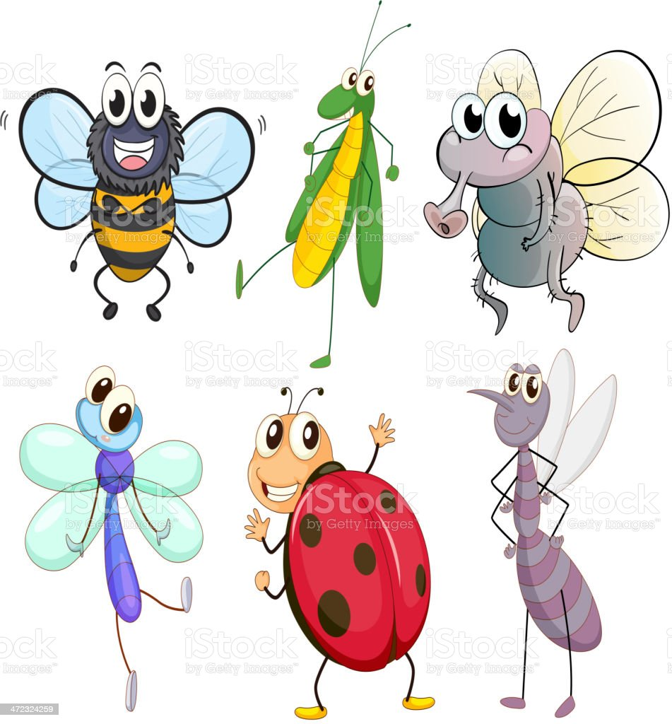 Different insects vector art illustration
