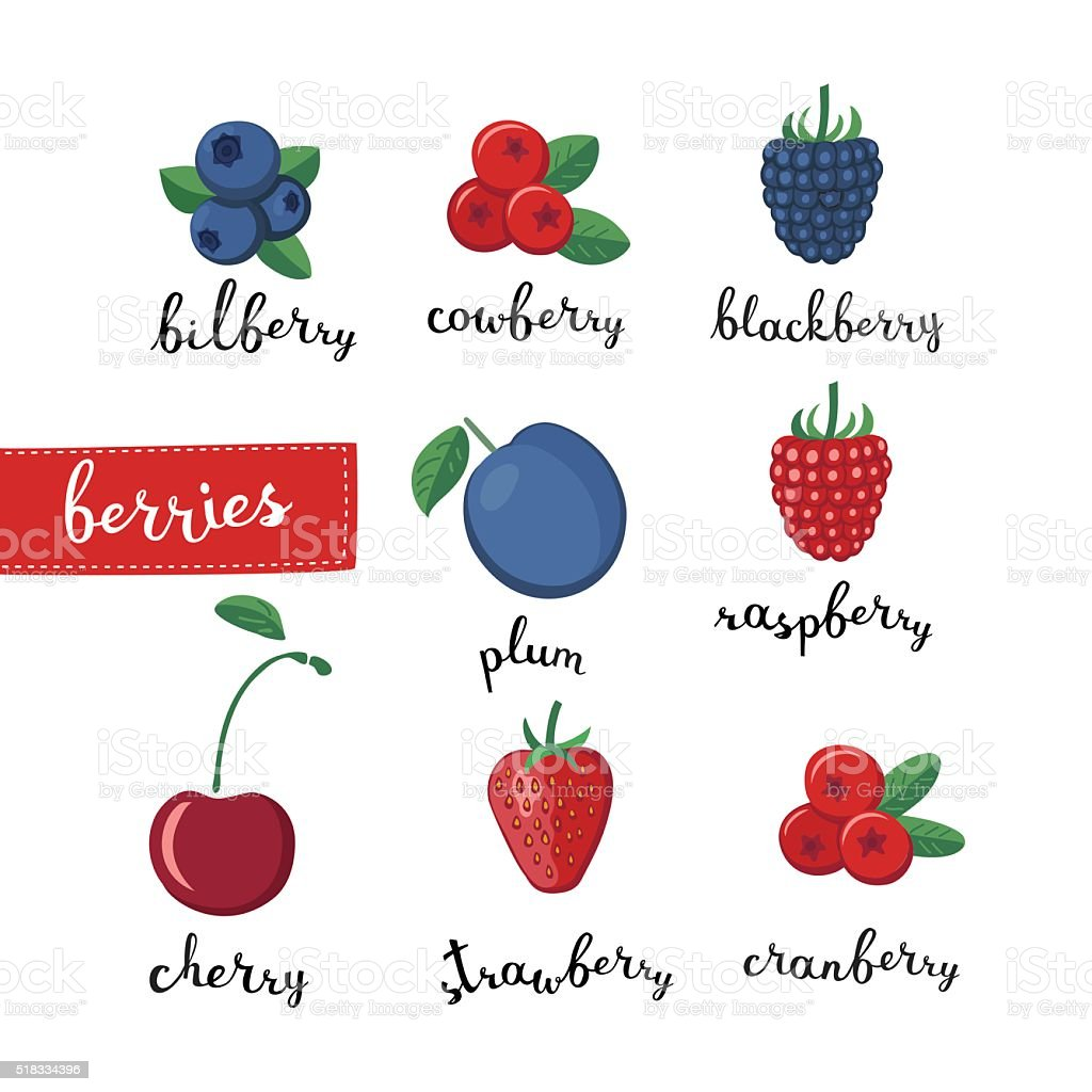 Different kinds of berries  and lettering name vector art illustration