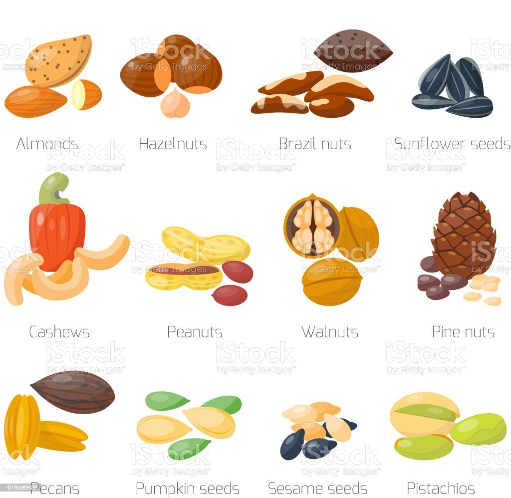 Different nuts vector set. vector art illustration