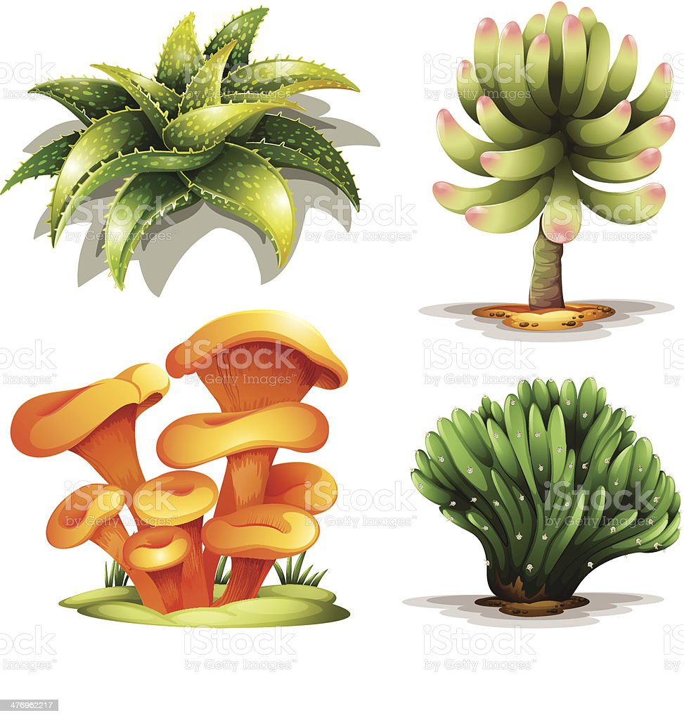 Different plants vector art illustration