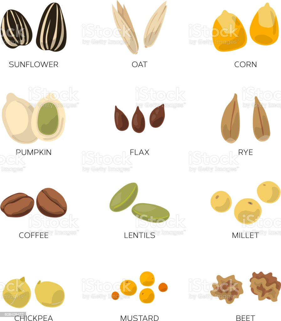 Different seeds isolated on white. Sunflower, coffee, pumpkin and other vector icon set vector art illustration