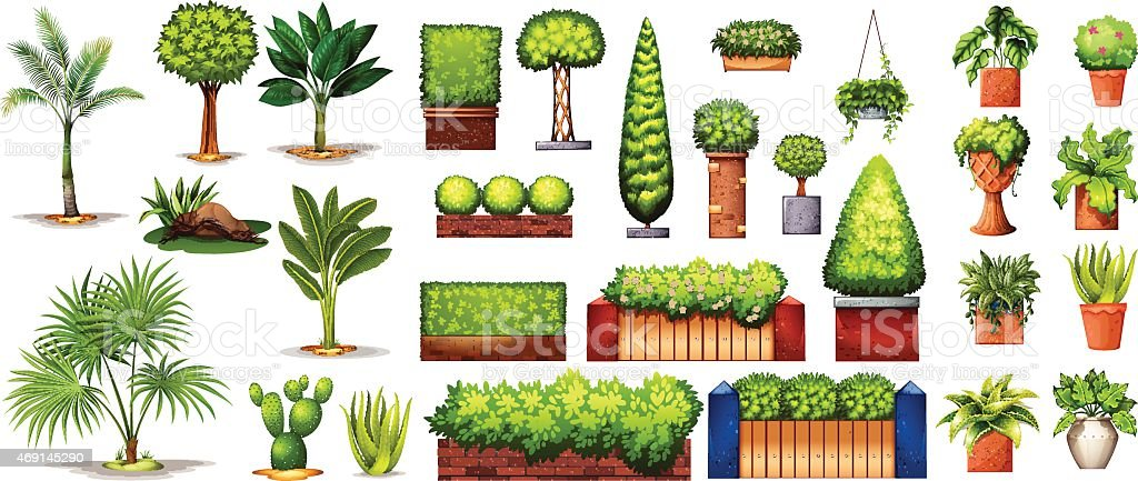 Different species of plants vector art illustration