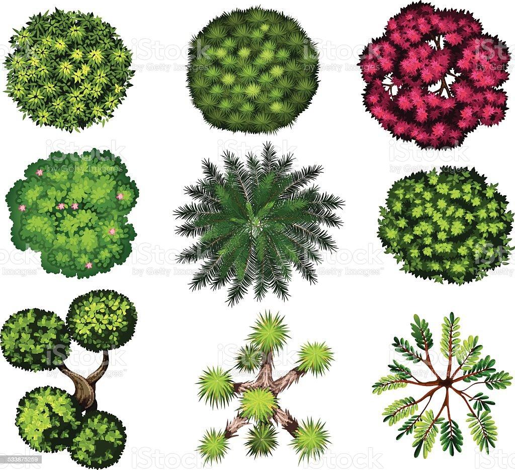 Different styles of decorative plants vector art illustration