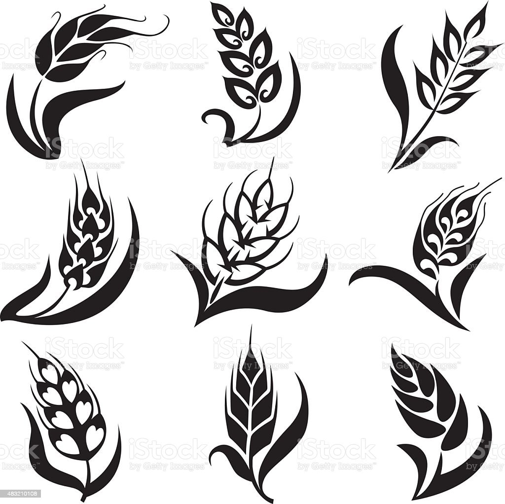 Different Styles of Wheat Collection vector art illustration