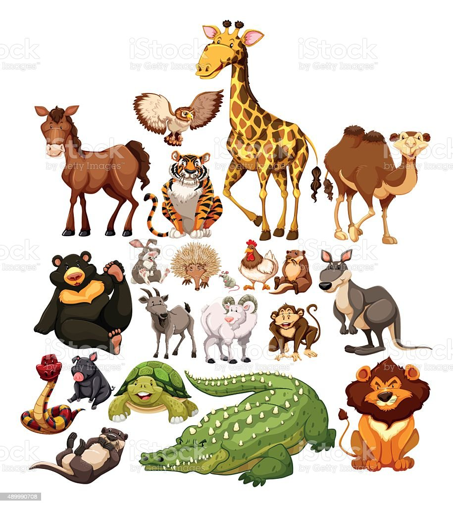 Different type  wild animals vector art illustration