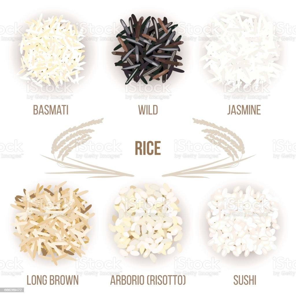 Different types of rice grains isolated on white background. Basmati, wild, jasmine, long brown, arborio, sushi vector art illustration