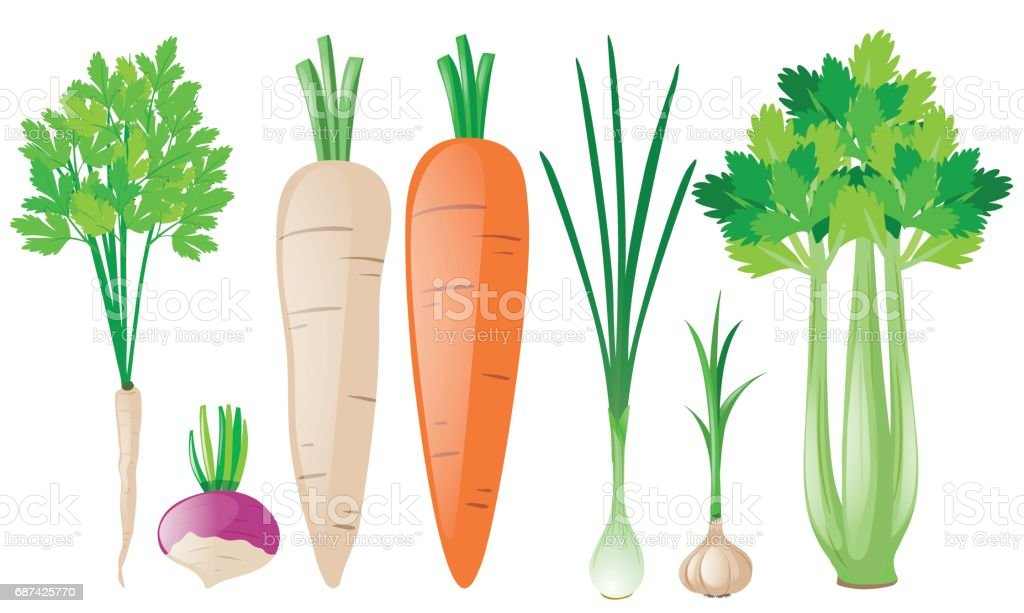 Different types of root vegetables vector art illustration
