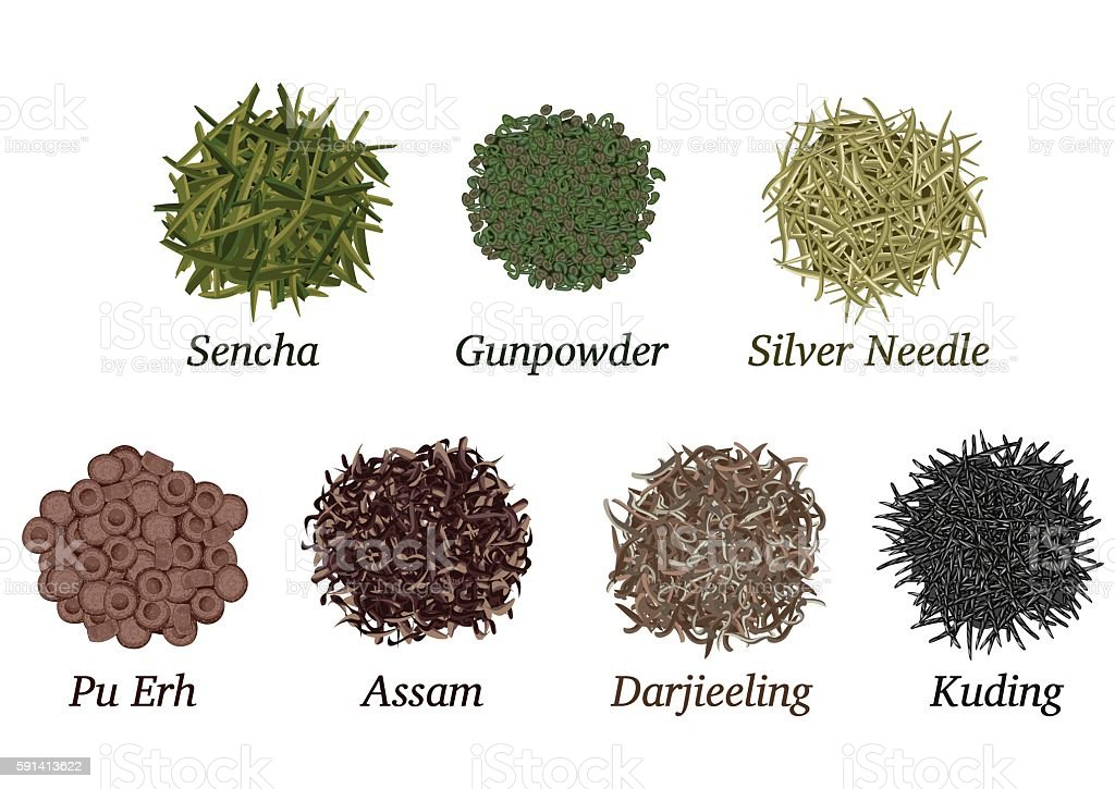 Different types of tea vector art illustration