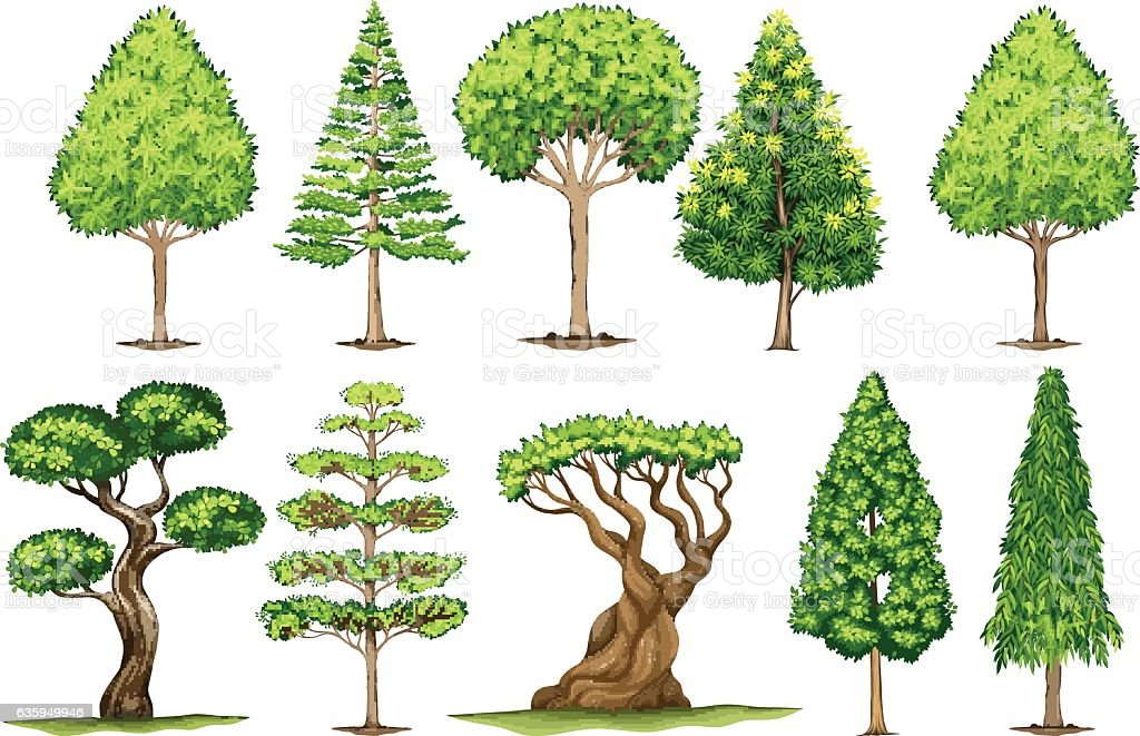 Different Types Of Trees Stock Vector Art 635949946 Istock