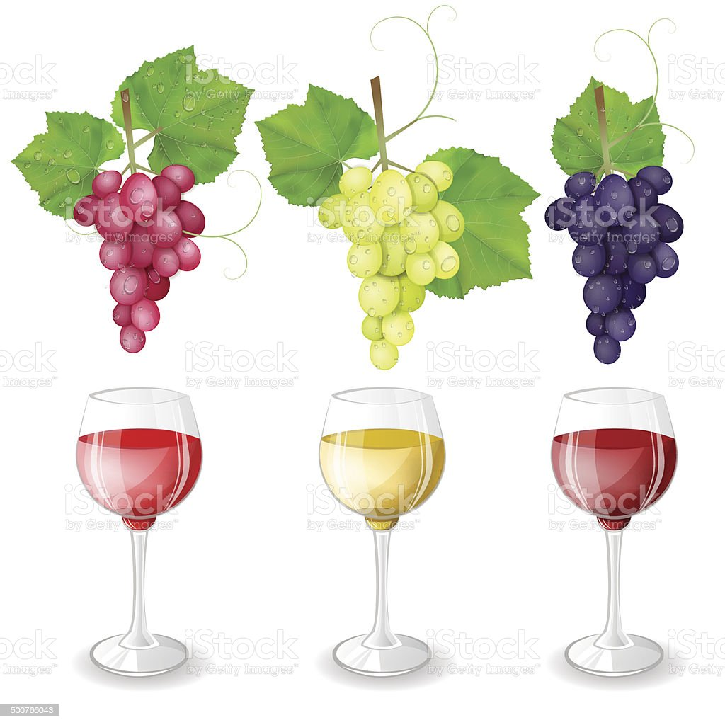 Different varieties of grapes and glasses of wine on white background royalty-free stock vector art