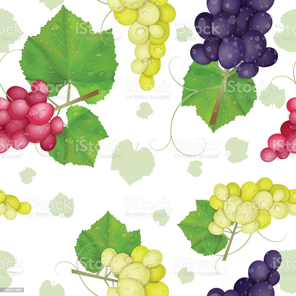 different varieties of grapes with leaves on white background royalty-free stock vector art