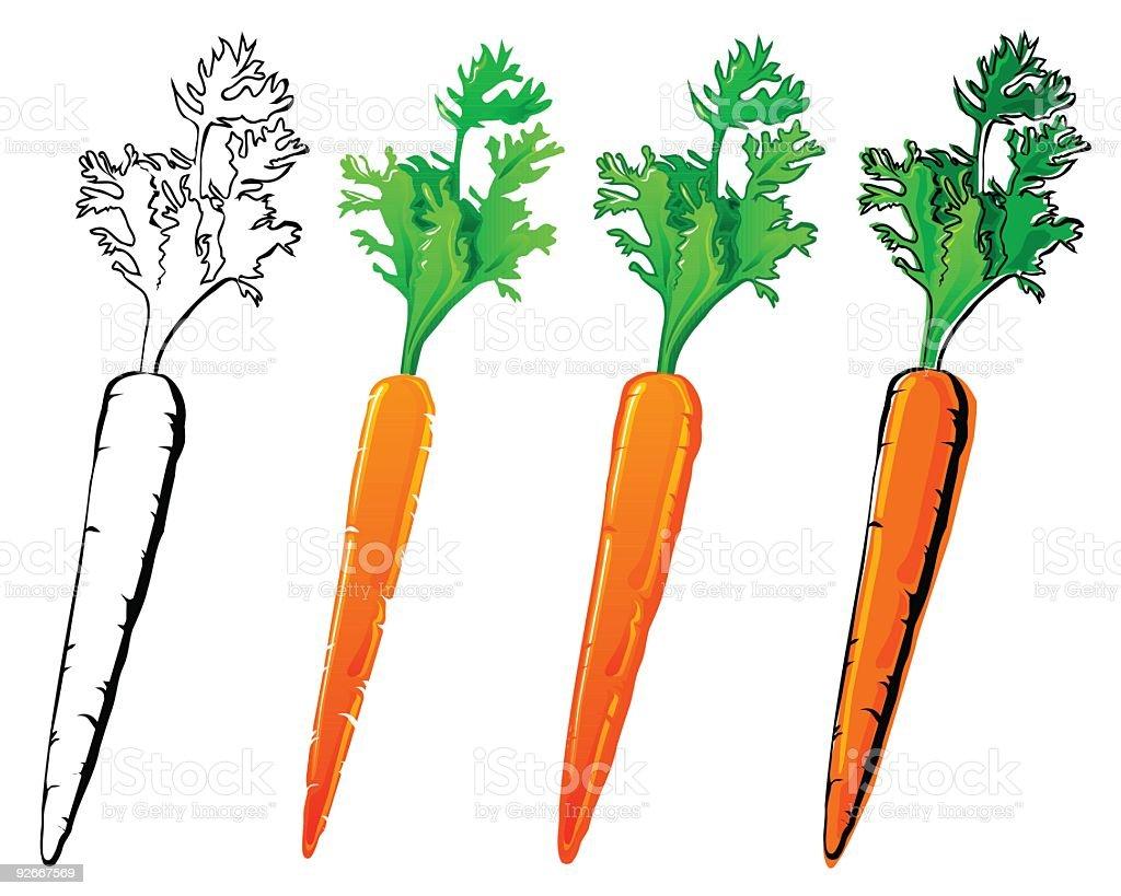 Different vector stylized carrot illustration vector art illustration