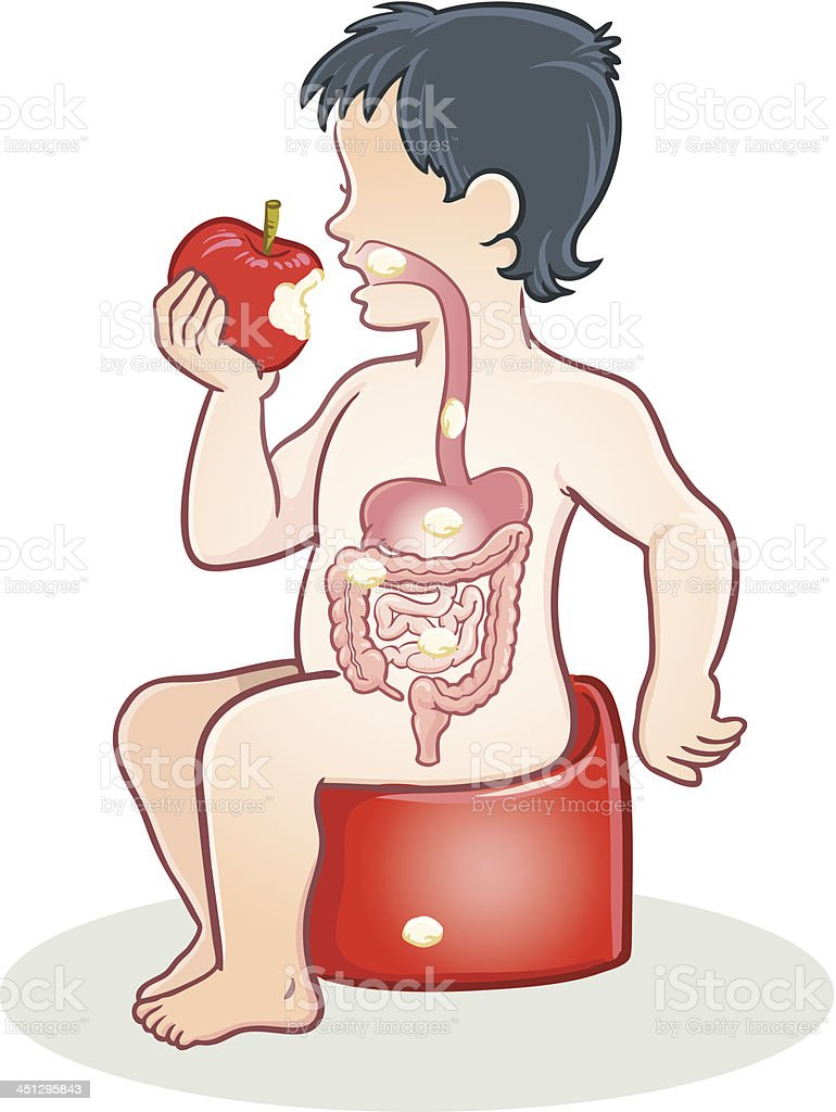 Digestive system royalty-free stock vector art