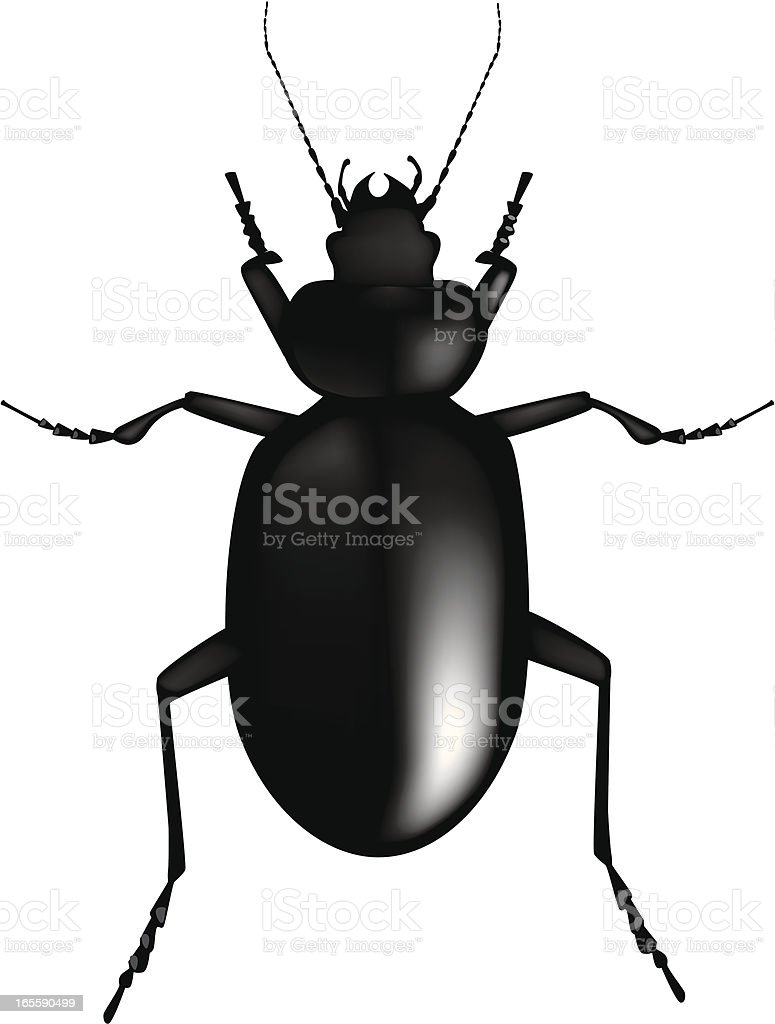 Digital illustration of a black beetle royalty-free stock vector art
