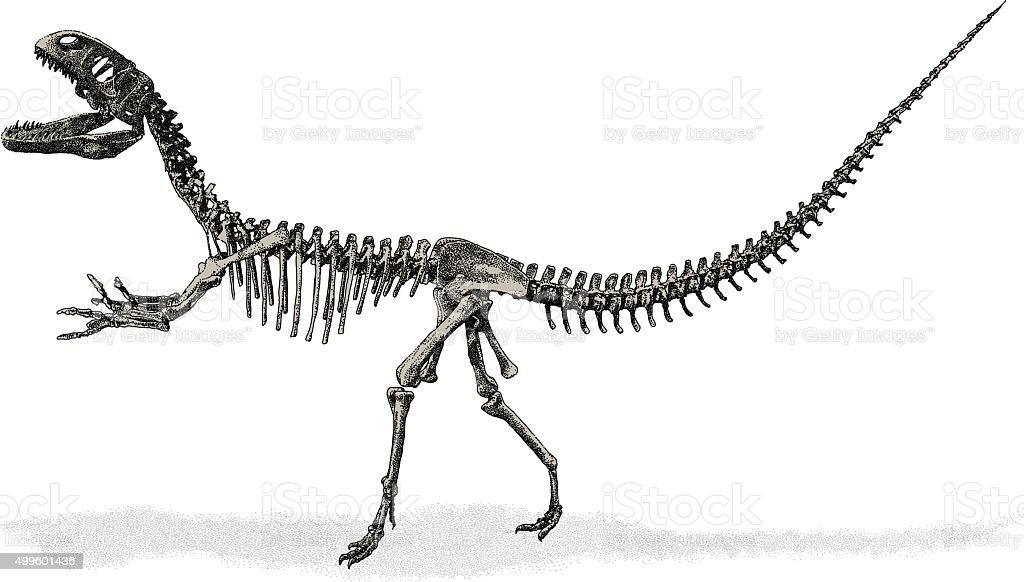 Dinosaur Skeleton vector art illustration