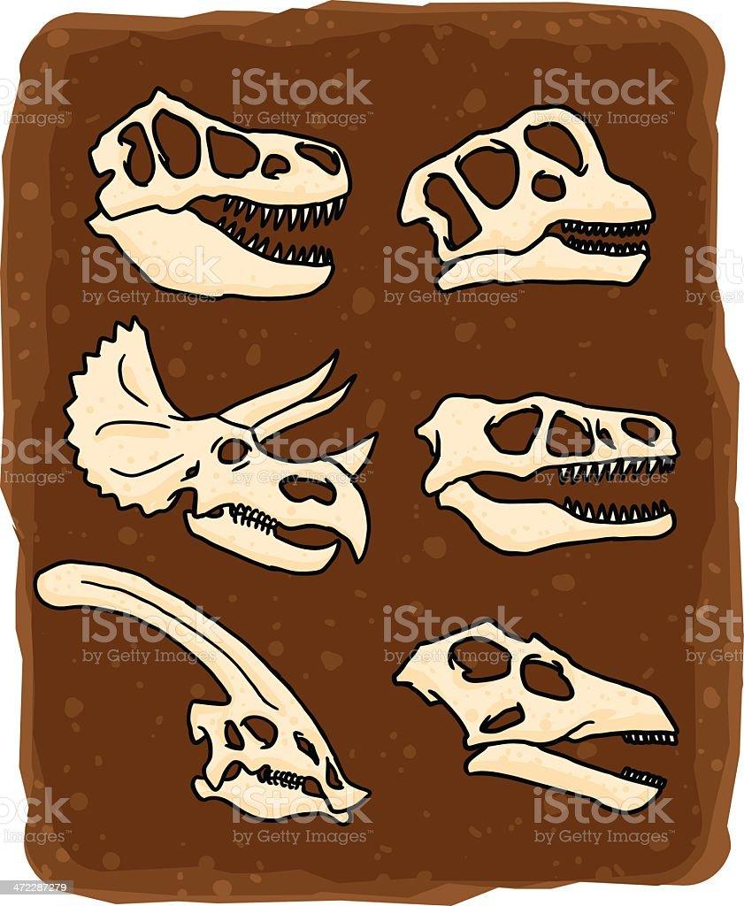 dinosaur skulls royalty-free stock vector art