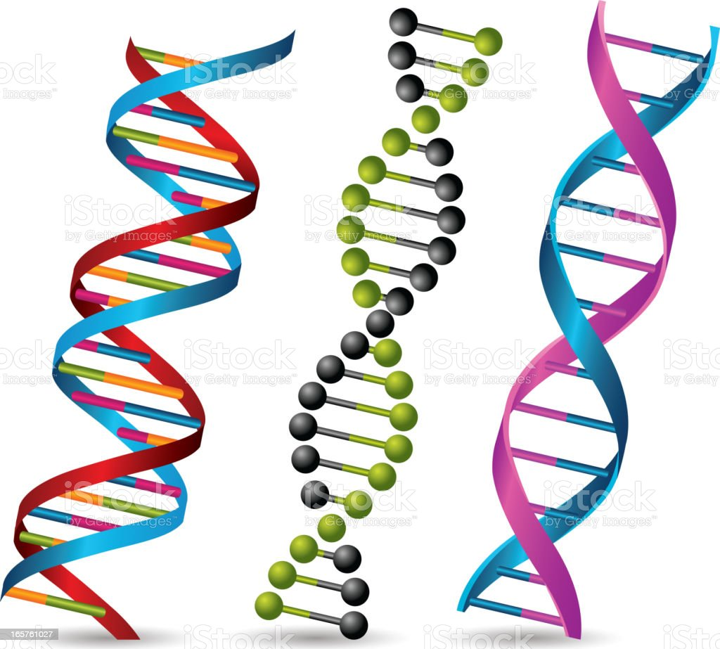 Dna strands royalty-free stock vector art