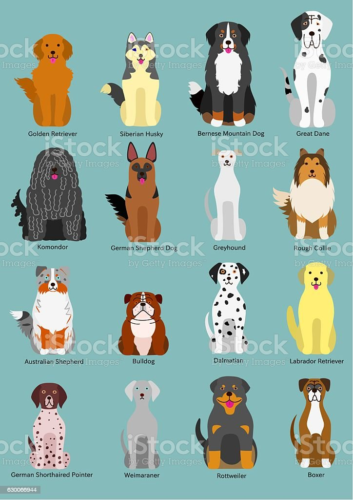 dog breed vector art illustration