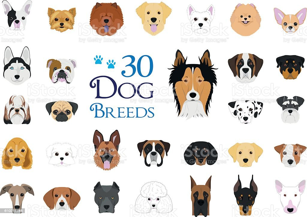 30 dog breeds Vector Collection in cartoon style vector art illustration