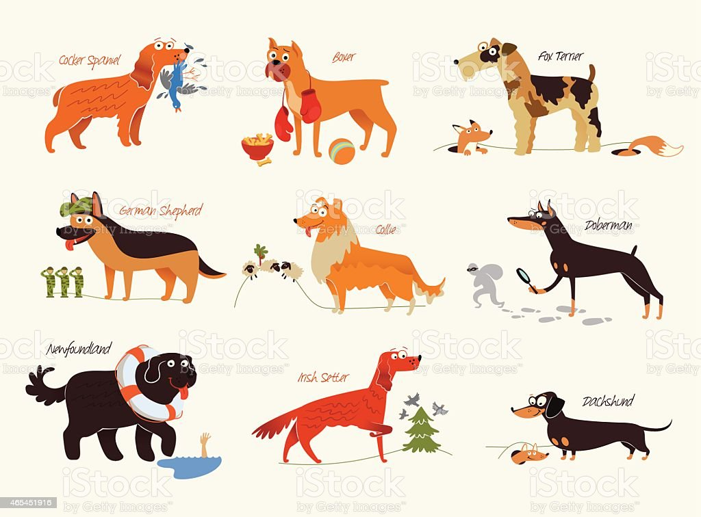 Dog breeds. Working dogs vector art illustration