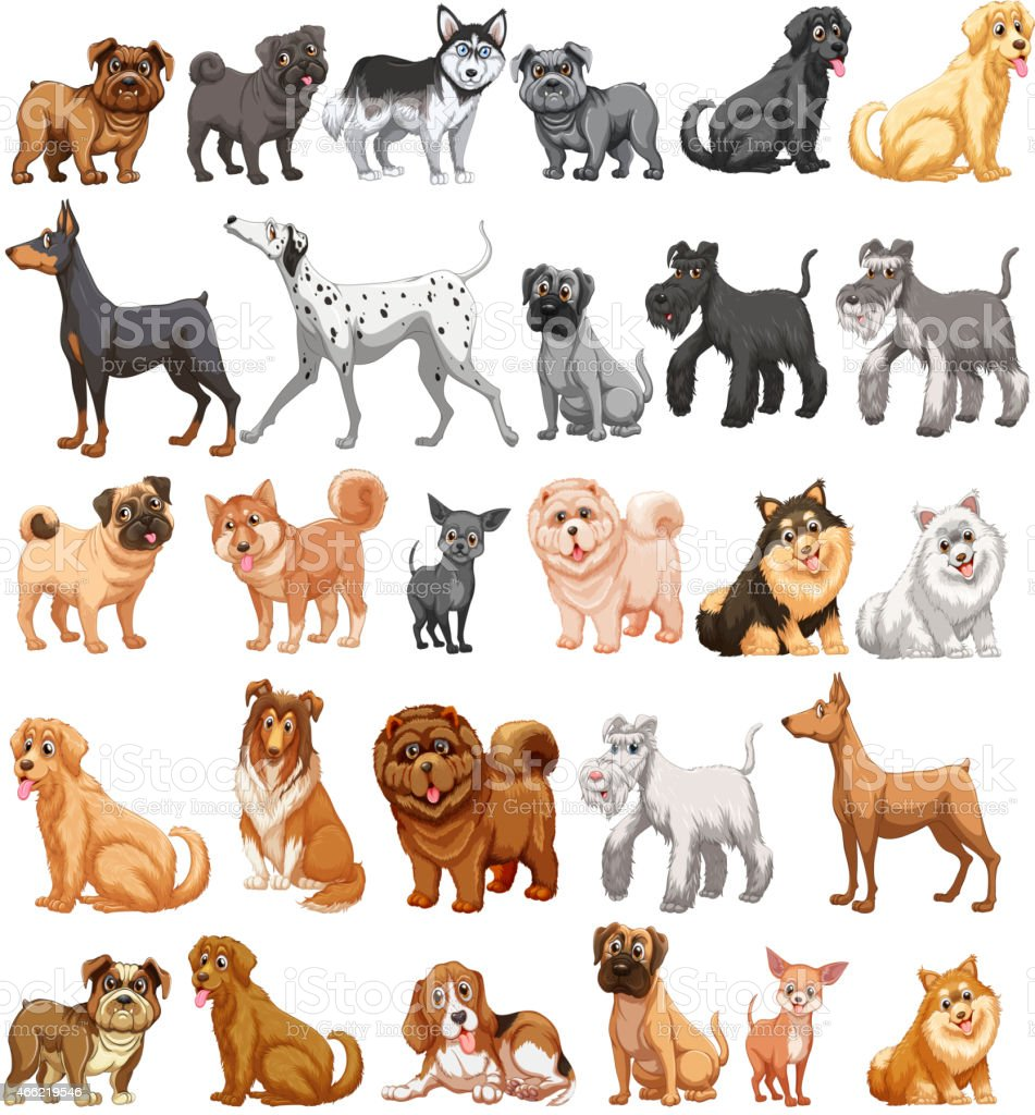 Dog collection vector art illustration