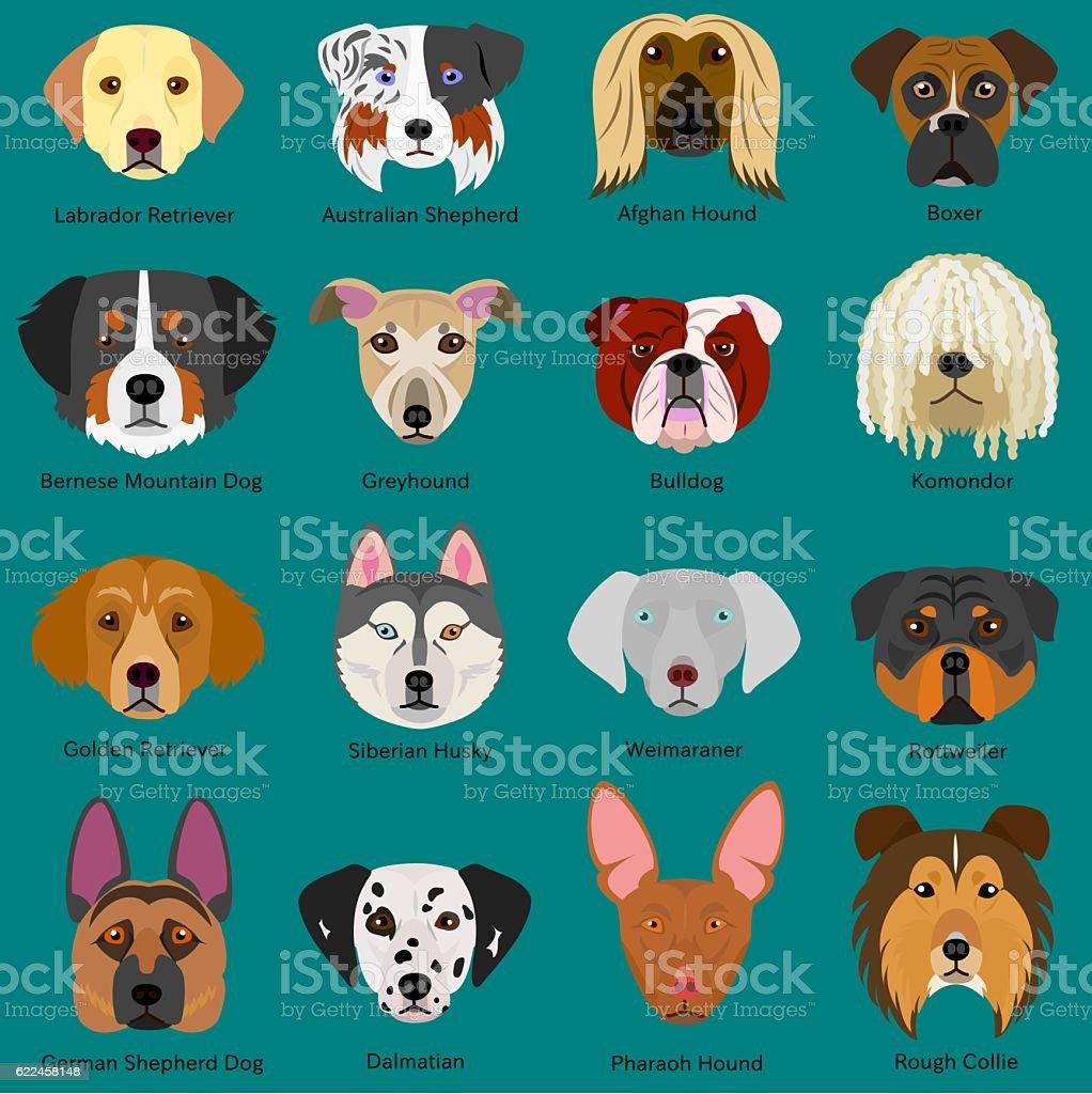 dog faces set with breeds name vector art illustration