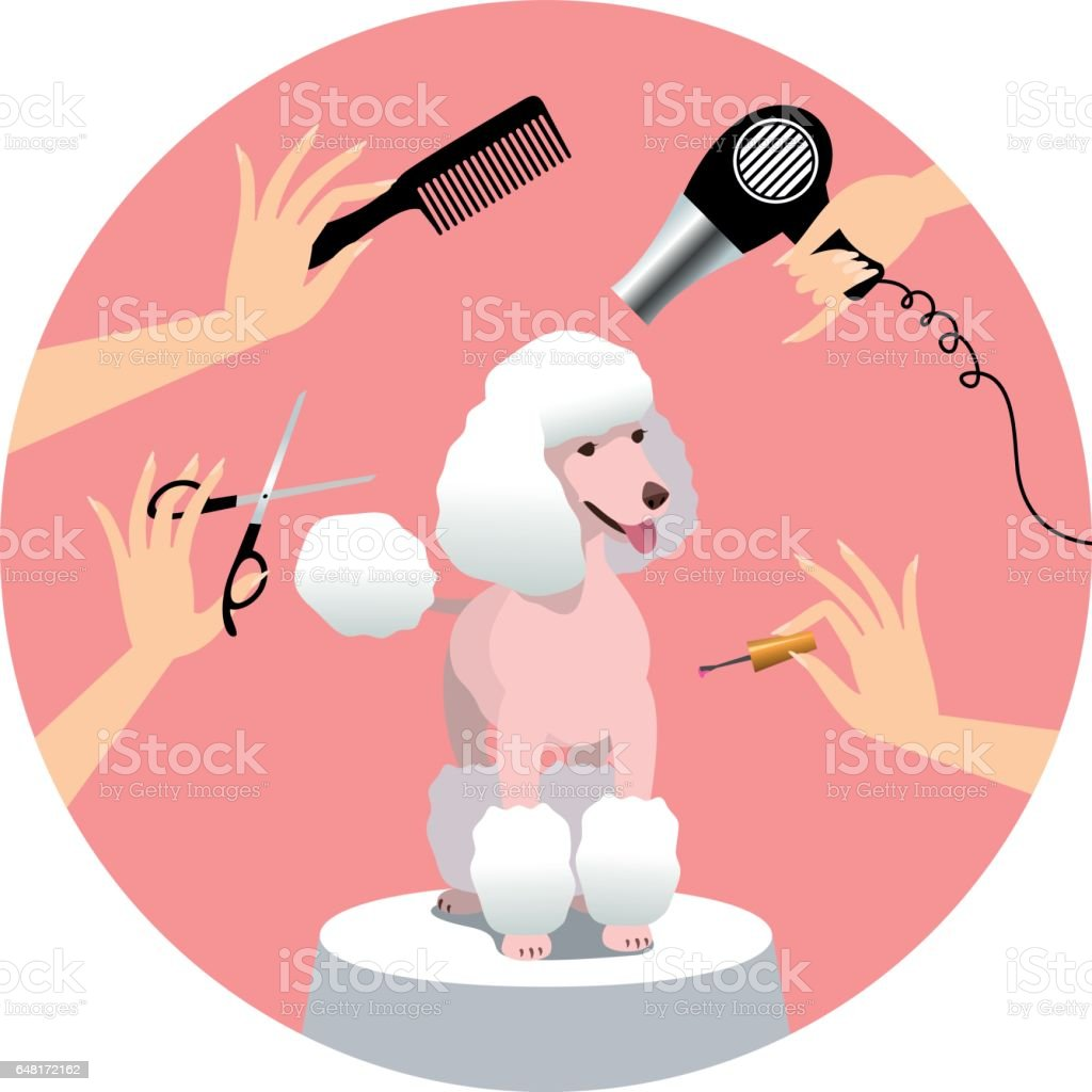 Dog grooming vector art illustration