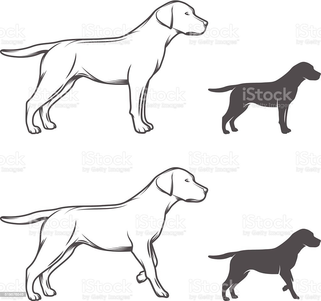 Dog in different poses isolated on white background vector art illustration