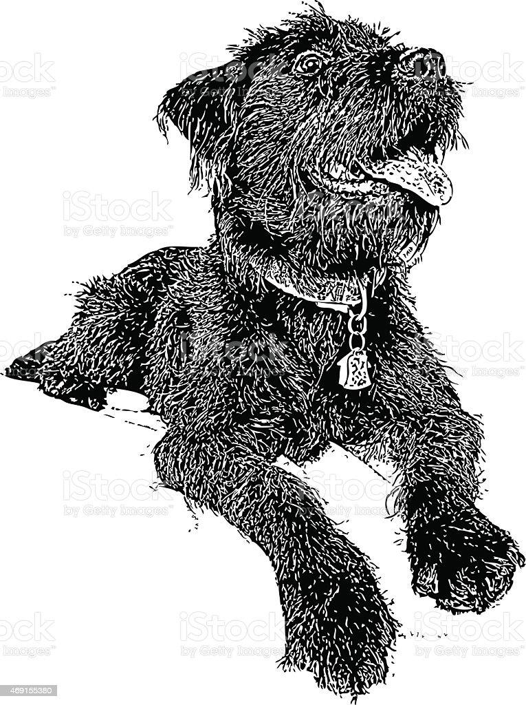 Dog. Labradoodle vector art illustration