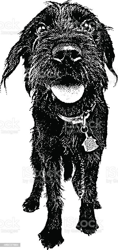 Dog. Labradoodle with Funny Expression vector art illustration