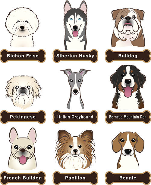 Greyhound Clip Art, Vector Images & Illustrations - iStock