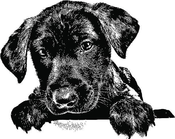 Labrador Retriever Clip Art, Vector Images & Illustrations ...