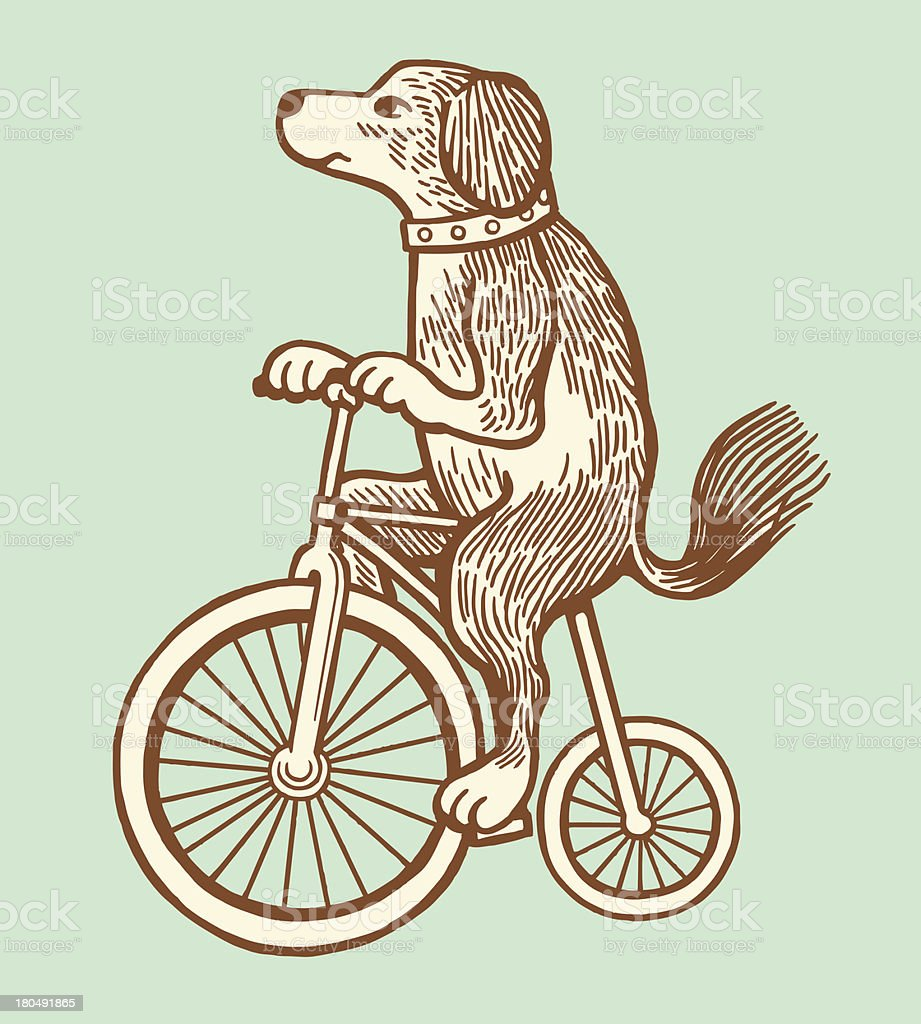 Dog Riding a Bike vector art illustration